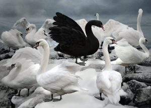 A black swan among the white